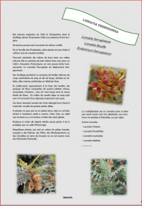 JOURNAL LA VALERIANE PAGE 7